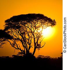 Ocaso africano en sabana