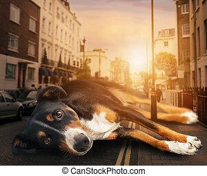 ocaso, camino, mountaindog, perro, appenzeller, acostado