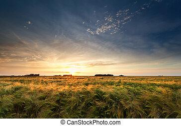 Ocaso dorado sobre el campo de cebada