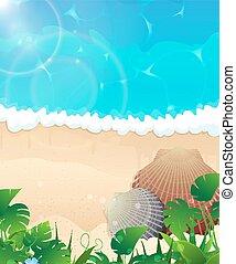 Ocean Beach con con conchas