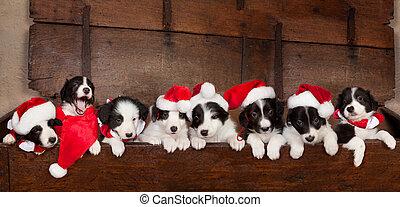 Ocho cachorros de navidad