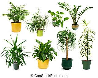 Ocho plantas interiores diferentes en un set