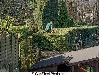 ocio, -, cortes, seto, jardinería