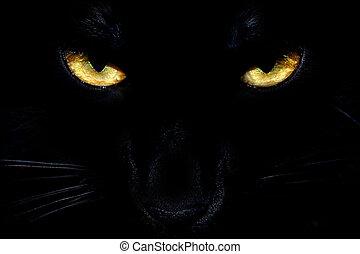 ojos, gato negro