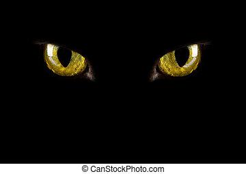 ojos, halloween, encendido, plano de fondo, dark., gato