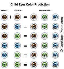 ojos, probable, color, predicción, niño, tabla