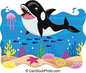 orca, cartón