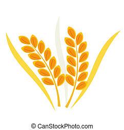 oreja, trigo, cereal