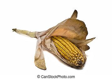 Orejas de maíz aisladas sobre el blanco.