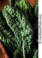 orgánico, verde, col rizada, lacinato