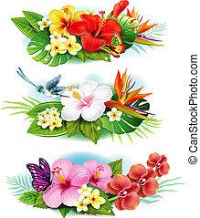 Organización de flores tropicales