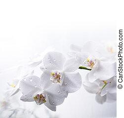 Orquídea blanca en el agua