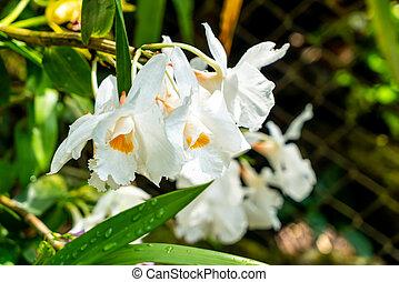 Orquídea blanca en el jardín