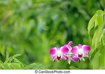 Orquídea en verde