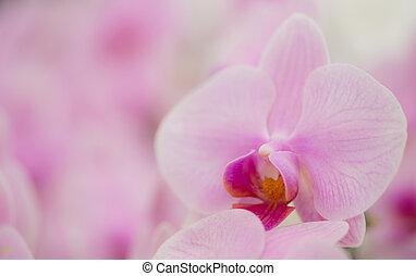 Orquídea rosa en el jardín