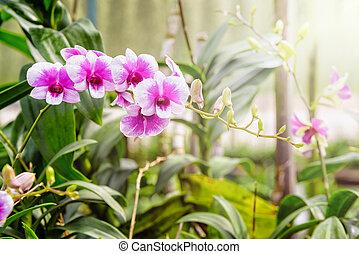 Orquídea rosa y blanca en la granja