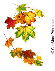 otoño, abajo, hojas, caer, colorido