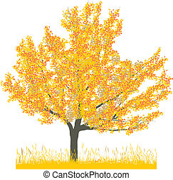 otoño, cerezo