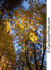 otoño, foilage