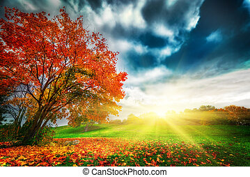 Otoño, paisaje de otoño en el parque