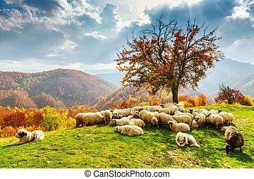 otoño, rumano, carpathians, paisaje