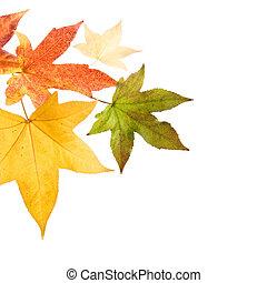 otoño sale, otoño