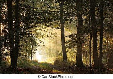 otoño, salida del sol, bosque