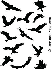 Pájaro águila filtrándose silueta