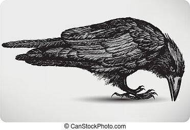 Pájaro de cuervo negro, dibujado a mano. Ilustración del vector.