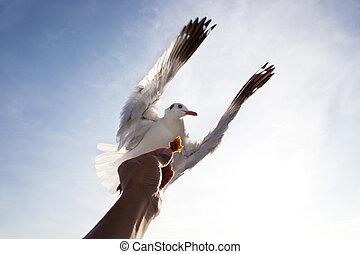 Pájaro de gaviotas volando sobre la mano alimentándose de nubes blancas azules que usan para la escena natural multipropósito
