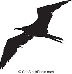 Pájaro fragata