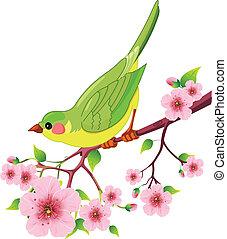 Pájaro primavera