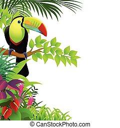 Pájaro Toucano en el bosque tropical