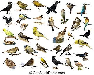 Pájaros aislados en blanco (35)