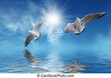 Pájaros blancos volando al sol