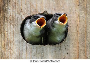 Pájaros en un pajar
