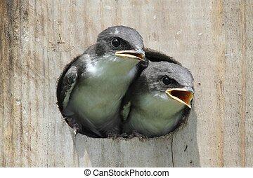 Pájaros en una casa de pájaros