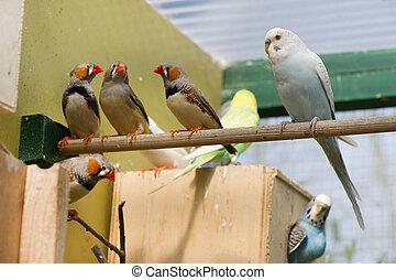 Pájaros en una jaula