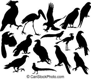 Pájaros vectores