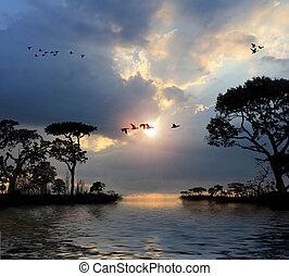 Pájaros voladores en el cielo, lagos, árboles, atardecer