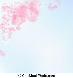 pétalos, azul, caer, abajo., romántico, rosa, sakura, corner., vuelo, cielo, flores, cuadrado, backgroun