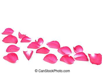 Pétalos rosados