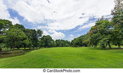 público, cielo azul, árboles, parque, césped verde
