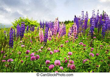 púrpura, rosa, wildflowers
