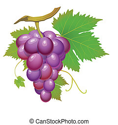 púrpura, uva