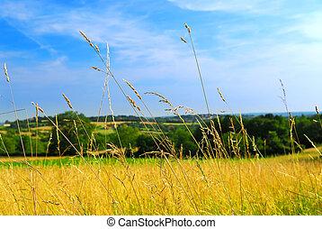 país, pradera, paisaje