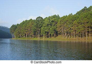 paisaje, árboles de pino, lago