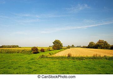 Paisaje de agricultura