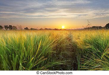 Paisaje de campo de trigo con camino en el atardecer
