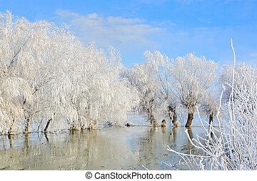 Paisaje de invierno con árboles cubiertos de nieve